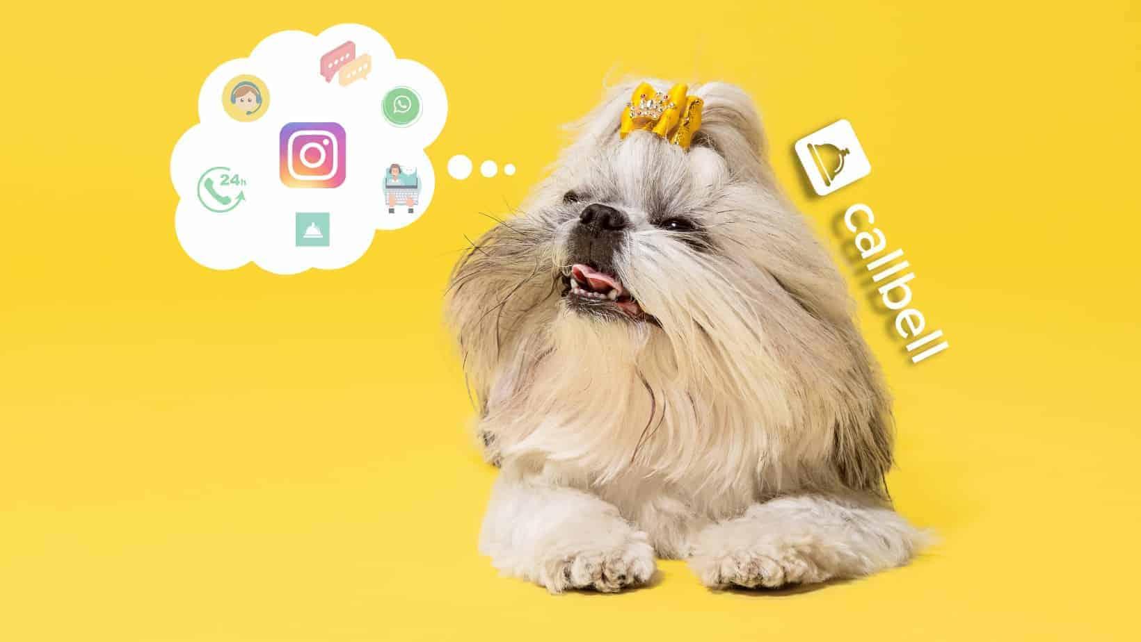 Multi-agent Instagram Direct